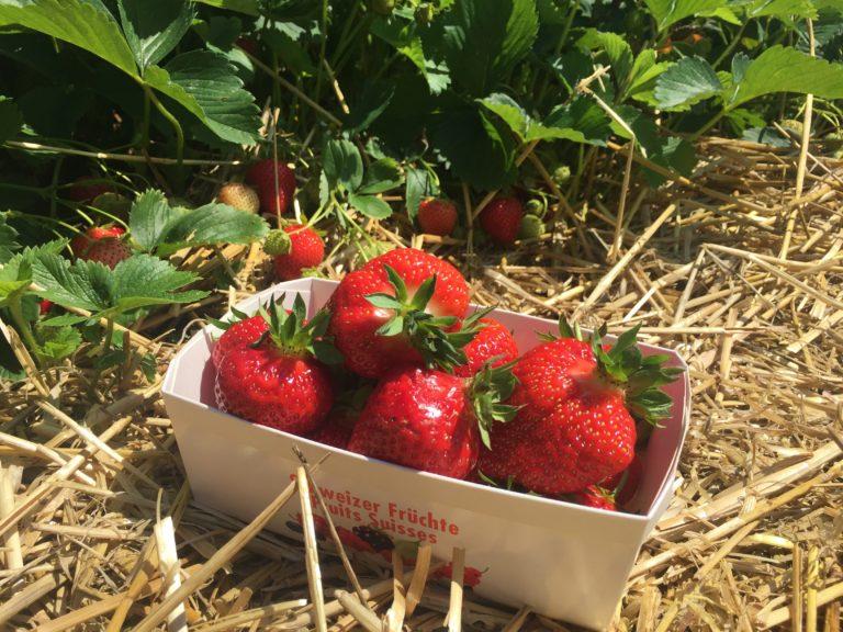 500 gr. Erdbeeren von Erdbeerspass